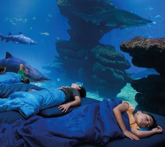 Halloween en Palma Aquarium