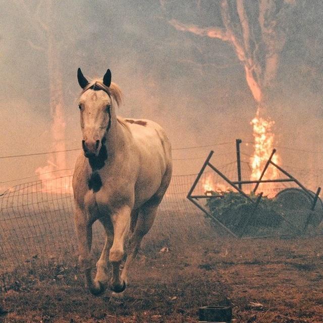 Los incendios de Australia y el cambio climático: acciones para pararlo